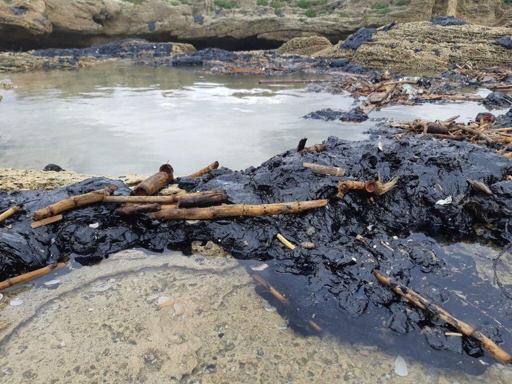экологическая катастрофа в Израиле